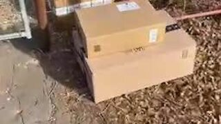 Dog tears open FedEx box, but not UPS boxes because he can't get them