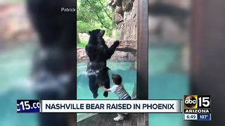 Bear from Phoenix Zoo goes viral for adorable video - Video