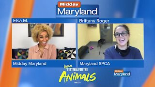 Maryland SPCA - Virtual Festival for the Animals