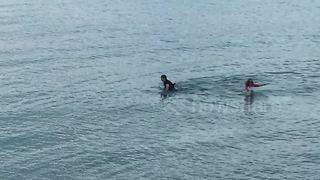 Locals rescue disorientated dolphin in Dorset, UK - Video