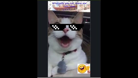 Who calls you cat, there are cats here_Troll corgi tom