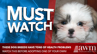 Veterinarians Publish Critical Report Urging People To Stop Buying Certain Dog Breeds - Video