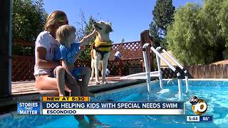 Dog helping kids with special needs swim