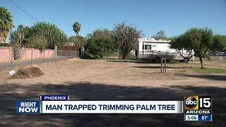 Man injured while trying to trim a palm tree in Phoenix - Video