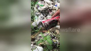 Baby snake rescued after getting stuck in fizzy drink can - Video
