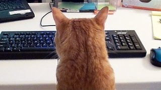 What it's like to Work with Cats! - Video