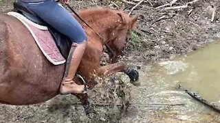 Playful horse has a blast splashing in the mud