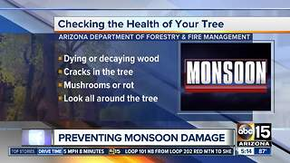 Are your trees ready for the monsoon? - Video