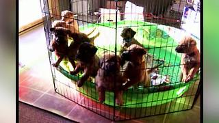 10 Puppies Waking Up | Cutest Video This Week! - Video