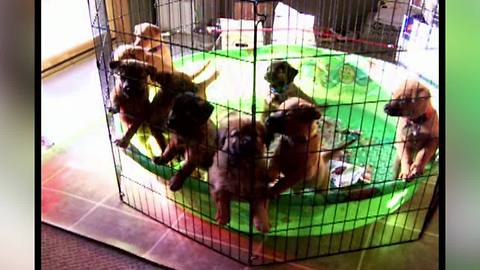 10 Puppies Waking Up   Cutest Video This Week!