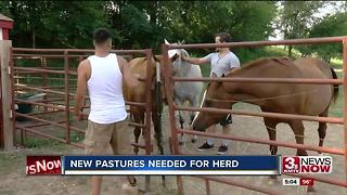 Horses non-profit needs new pasture - Video