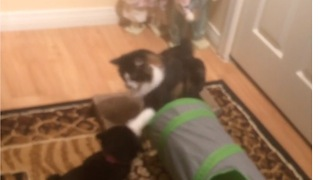Cat Punches Out Puppy  - Video