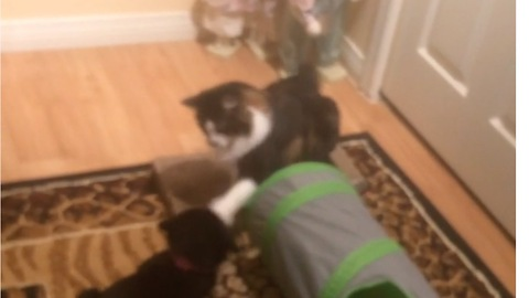 Cat Punches Out Puppy