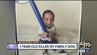 Baby dragged outside by dog, killed in south Phoenix attack - Video