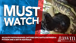 Wildlife Photographer Captures Epic Battle Between A Python And A Bat In Australia - Video