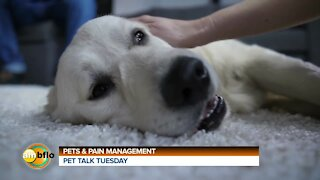 Pet Talk Tuesday - Pets and pain management