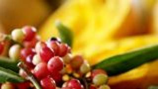 Discovering Exotic Tropical Fruits