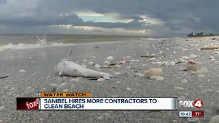 Sanibel brings in more workers for fish kill cleanup - Video