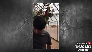 ​Animals Being Jerks #19​ - Video