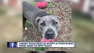 "I Heart Dogs Rescue & Animal Haven ""Adopt-a-thon"""
