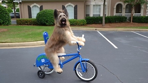 Incredibly Talented Dog Rides Bicycle By Himself