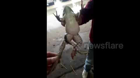 Frog born with five legs in central China
