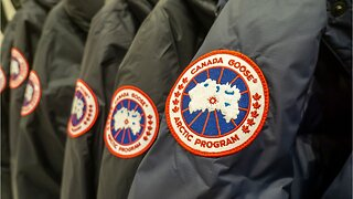 Canada goose dives after major losses
