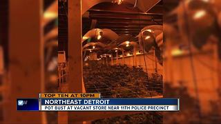 DPD discovers $127K marijuana grow operation across street from 11th precinct