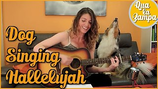 Musical Dog Howls Along As Owner Plays Hallelujah On The Guitar - Video