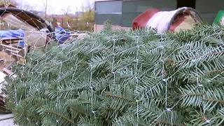 Owasso Christmas Tree Farm open after 35 years - Video