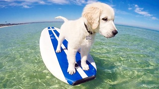 Puppy's first stand-up paddle board session - Video