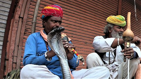 Centuries old cobra snake charming should be boycotted for many reasons