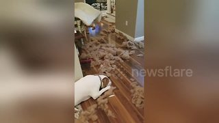 Dog caught red-handed after making a mess in owner's house - Video
