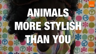 These Animals Have More Style Than You - Video