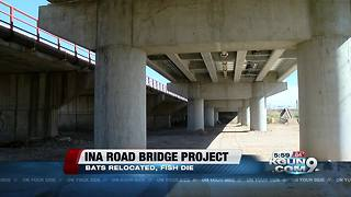 Ina Road Bridge construction disrupting wildlife - Video