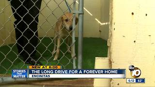 Mississippi dogs fly to San Diego to find forever home - Video
