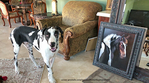 Great Dane Shows Off Horse Paintings by Lawrence Dyer