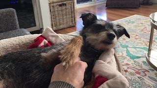 Pets who LOVE Belly Rubs