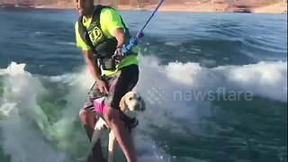 This six-month-old puppy loves wakeboarding with her owner