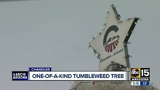 Chandler hosting Tumbleweed Tree lighting ceremony - Video