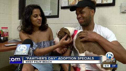 """Pawther's Day"" adoption specials at Peggy Adams Animal Rescue League"