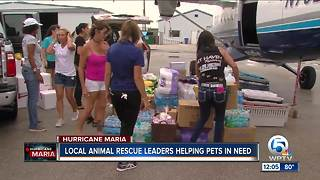 South Florida animal rescues team up to get supplies to Puerto Rico - Video