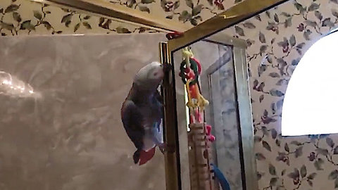 Parrot Displays His Hilarious Bathroom Habits