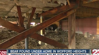 Bear found under home in Wofford heights - Video