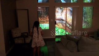 Dad uses projectors to create real-life 'Jurassic Park' for daughter, 7 - Video