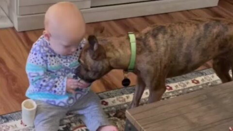 Patient puppy learns to share toys with baby best friend