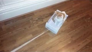 Cute Kitten Rides the Shoe Shoe Train - Video