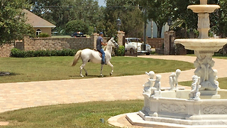 Casa Bella Estate Paso Fino Andalusian Horse and Rolls Royce - Video