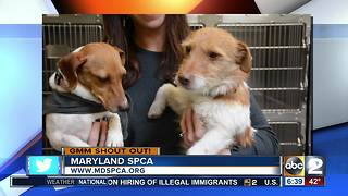 Good morning from 2 adorable dogs at the Maryland SPCA