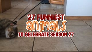 AFV's 27 Funniest Animals To Celebrate Season 27 - Video